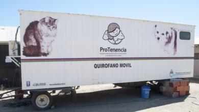 Photo of Caleta Olivia, Continúa el trabajo de castración animal para contribuir al control poblacional canino y felino.