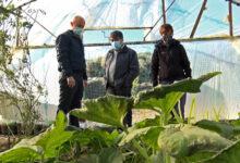 Photo of Caleta Olivia, El Municipio suma una nueva estructura en el Invernadero aumentando la producción